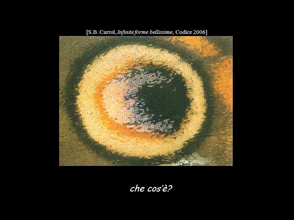 [S.B. Carrol, Infinite forme bellissime, Codice 2006]